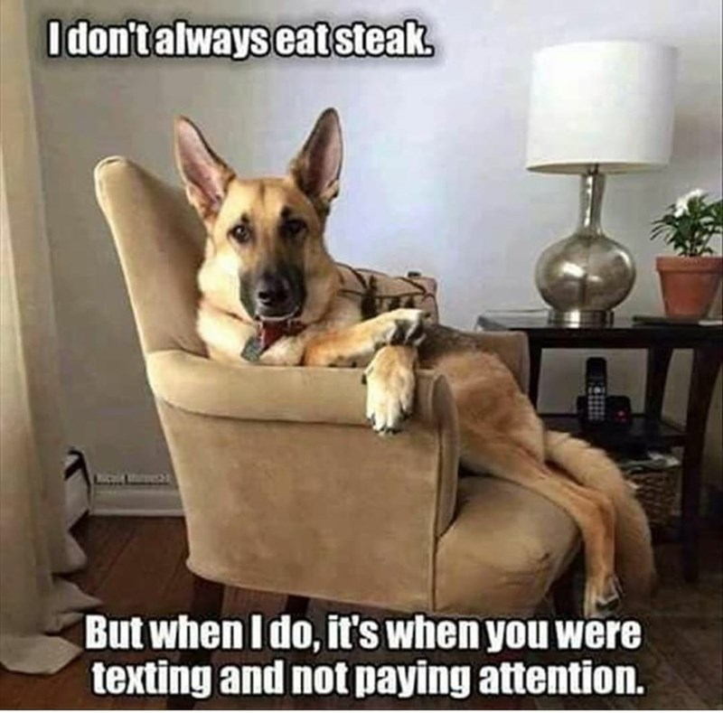 Dog - I don't always eatsteak. WICH But when I do, it's when you were texting and not paying attention.