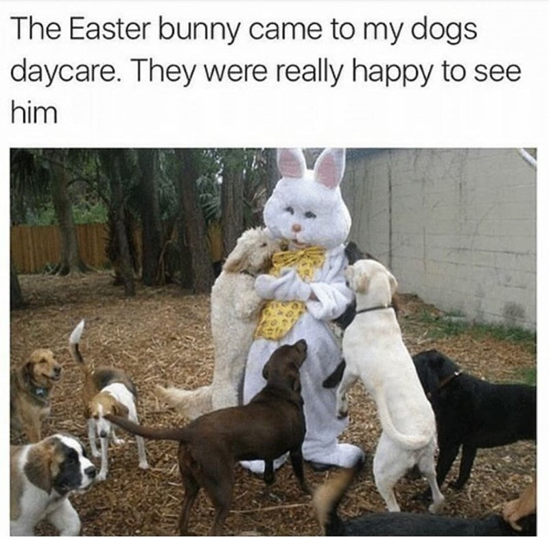 Photograph - The Easter bunny came to my dogs daycare. They were really happy to see him
