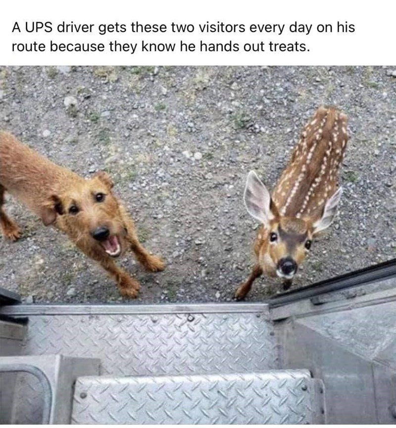 Dog - A UPS driver gets these two visitors every day on his route because they know he hands out treats.