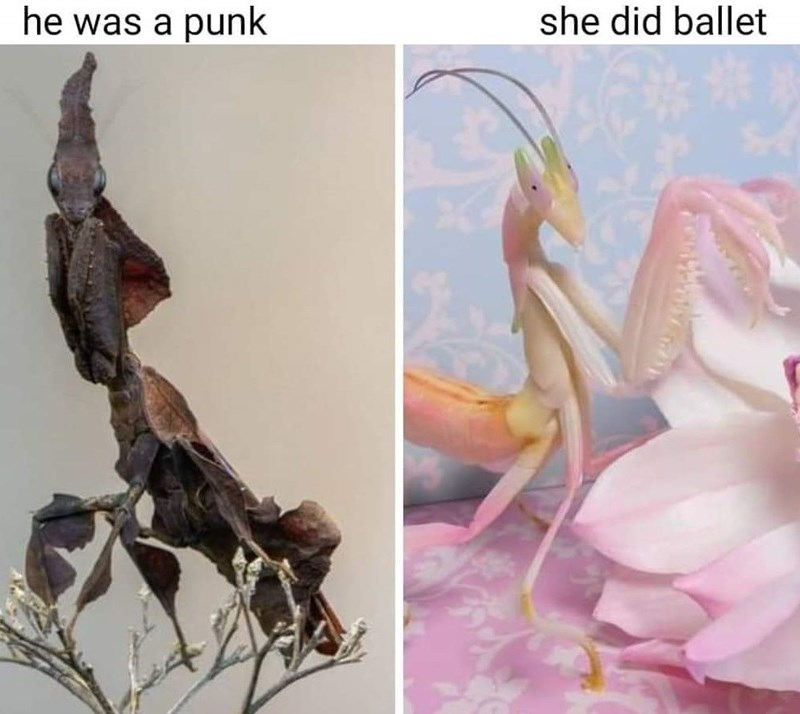 Flower - he was a punk she did ballet