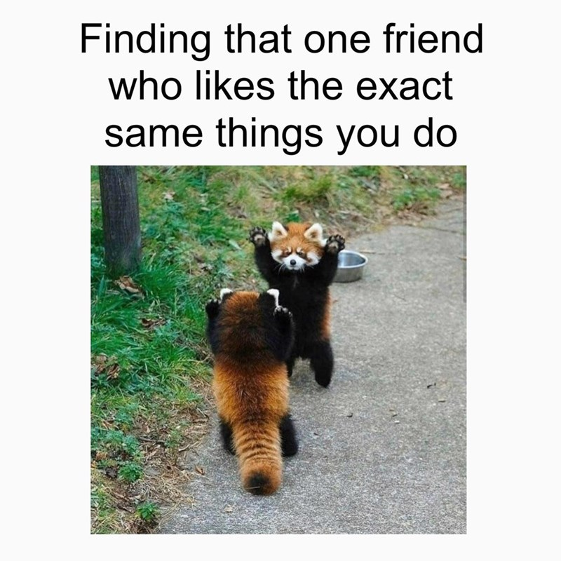 Vertebrate - Finding that one friend who likes the exact same things you do
