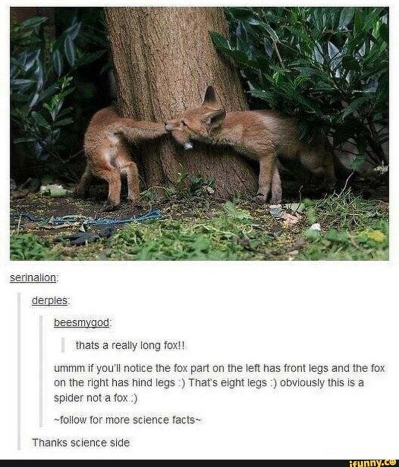 Vertebrate - serinalion: derples beesmygod | thats a really long fox!! ummm if you'll notice the fox part on the left has front legs and the fox on the right has hind legs :) That's eight legs :) obviously this is a spider not a fox :) -follow for more science facts- Thanks science side ifunny.co