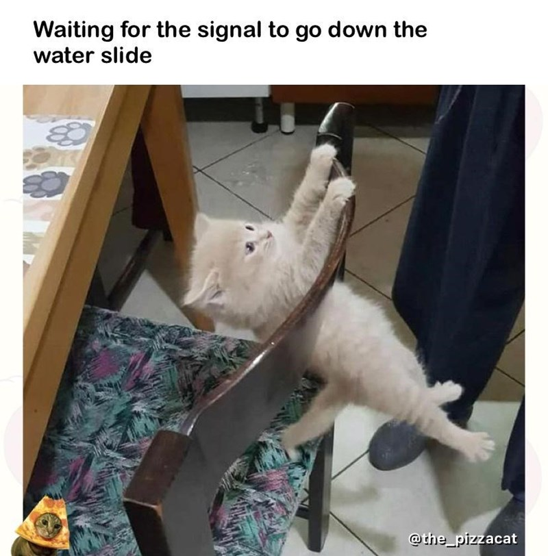Cat - Waiting for the signal to go down the water slide @the_pizzacat