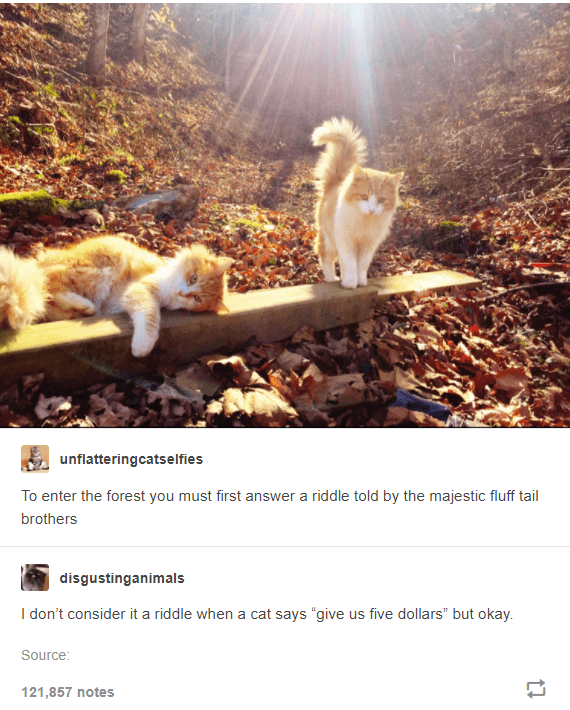 """Plant - unflatteringcatselfies To enter the forest you must first answer a riddle told by the majestic fluff tail brothers disgustinganimals I don't consider it a riddle when a cat says """"give us five dollars"""" but okay. Source: 121,857 notes"""