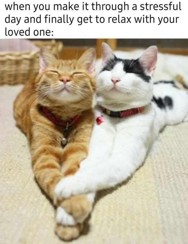 Cat - when you make it through a stressful day and finally get to relax with your loved one: