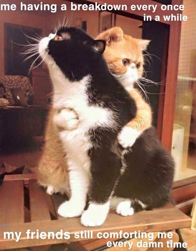 Cat - me having a breakdown every once in a while my friends still comforting me every damn time