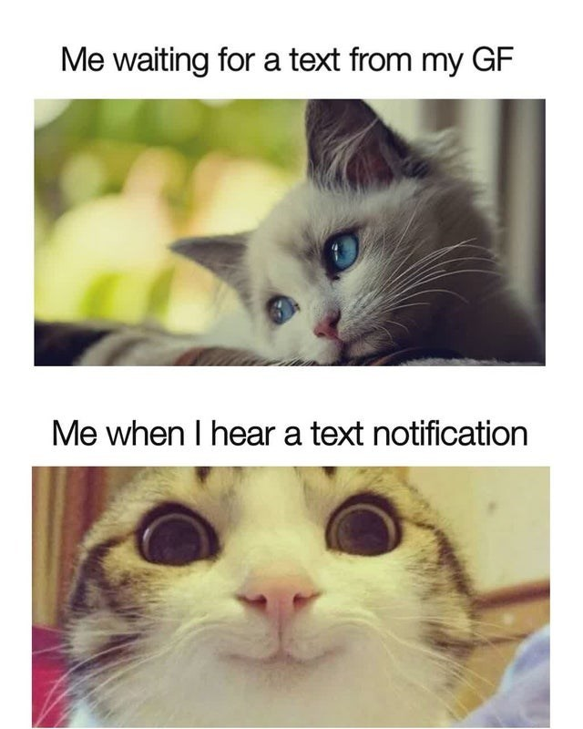 Nose - Me waiting for a text from my GF Me when I hear a text notification