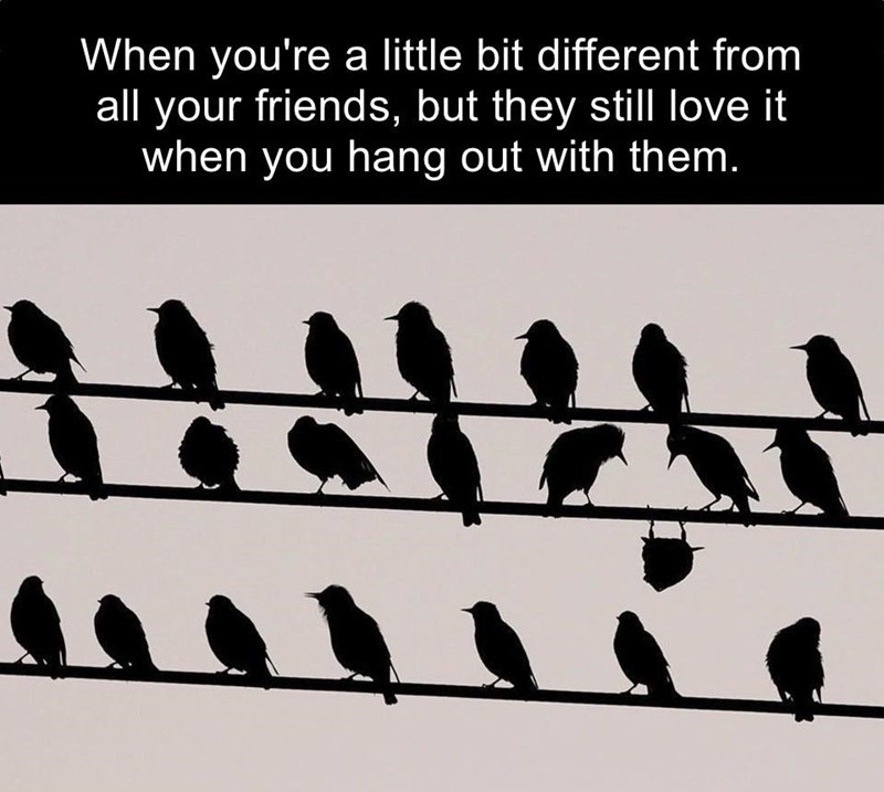 Bird - When you're a little bit different from all your friends, but they still love it when you hang out with them.