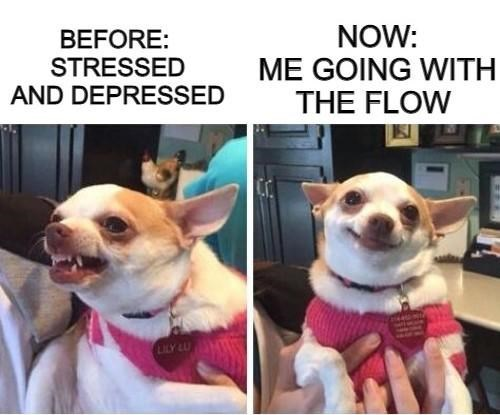 Dog - BEFORE: STRESSED AND DEPRESSED NOW: ME GOING WITH THE FLOW LILY LU