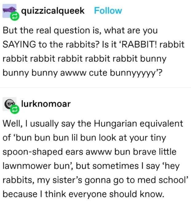 Font - quizzicalqueek Follow But the real question is, what are you SAYING to the rabbits? Is it 'RABBIT! rabbit rabbit rabbit rabbit rabbit rabbit bunny bunny bunny awww cute bunnyyyyy'? lurknomoar Well, I usually say the Hungarian equivalent of 'bun bun bun lil bun look at your tiny spoon-shaped ears awww bun brave little lawnmower bun', but sometimes I say 'hey rabbits, my sister's gonna go to med school' because I think everyone should know.