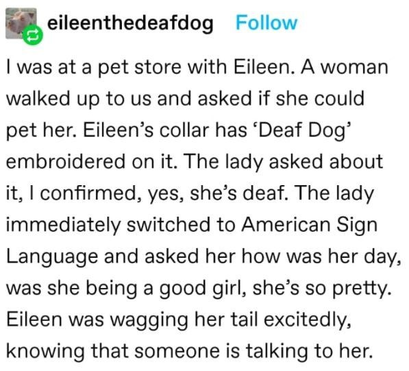 Font - eileenthedeafdog Follow I was at a pet store with Eileen. A woman walked up to us and asked if she could pet her. Eileen's collar has 'Deaf Dog' embroidered on it. The lady asked about it, I confirmed, yes, she's deaf. The lady immediately switched to American Sign Language and asked her how was her day, was she being a good girl, she's so pretty. Eileen was wagging her tail excitedly, knowing that someone is talking to her.