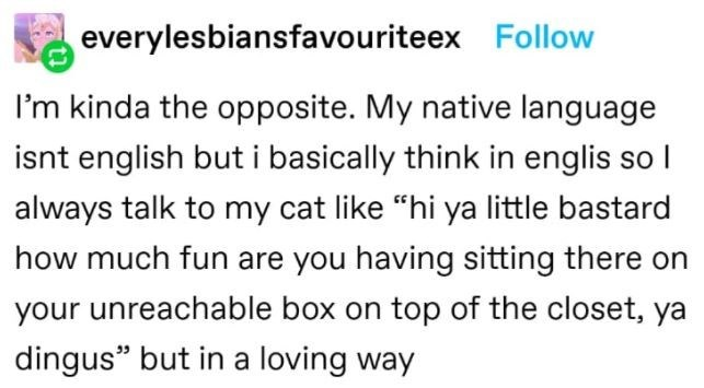 """Font - everylesbiansfavouriteex Follow I'm kinda the opposite. My native language isnt english but i basically think in englis so I always talk to my cat like """"hi ya little bastard how much fun are you having sitting there on your unreachable box on top of the closet, ya dingus"""" but in a loving way"""