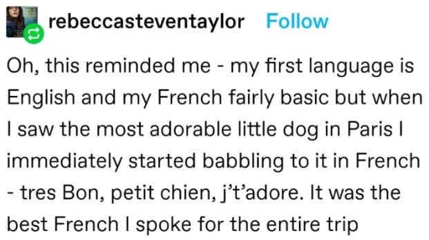 Font - rebeccasteventaylor Follow Oh, this reminded me - my first language is English and my French fairly basic but when I saw the most adorable little dog in Paris I immediately started babbling to it in French - tres Bon, petit chien, j't'adore. It was the best French I spoke for the entire trip