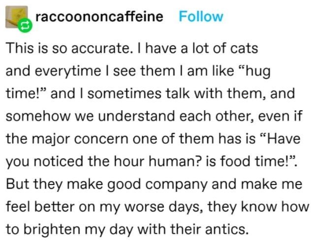 """Font - raccoononcaffeine Follow This is so accurate. I have a lot of cats and everytime I see them I am like """"hug time!"""" and I sometimes talk with them, and somehow we understand each other, even if the major concern one of them has is """"Have you noticed the hour human? is food time!"""". But they make good company and make me feel better on my worse days, they know how to brighten my day with their antics."""