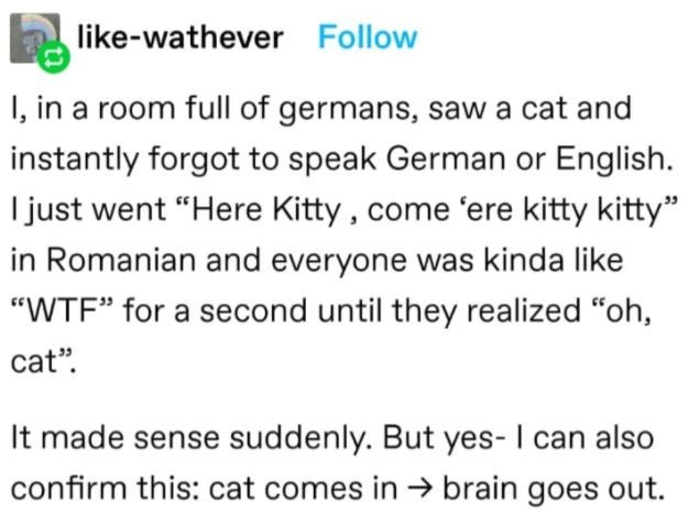 """Font - like-wathever Follow I, in a room full of germans, saw a cat and instantly forgot to speak German or English. I just went """"Here Kitty , come 'ere kitty kitty"""" in Romanian and everyone was kinda like """"WTF"""" for a second until they realized """"oh, cat"""". It made sense suddenly. But yes- I can also confirm this: cat comes in → brain goes out."""