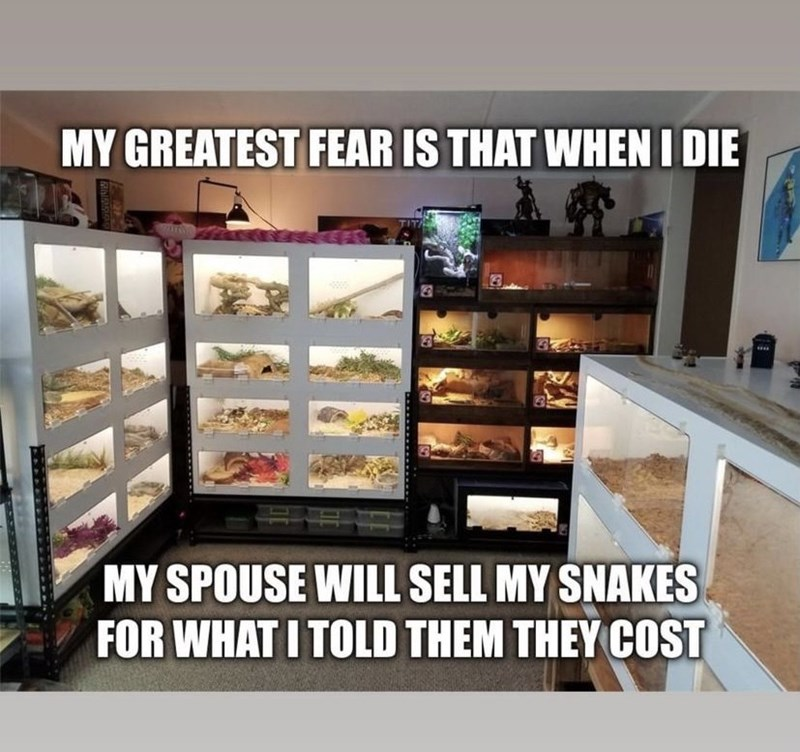 Shelf - MY GREATEST FEAR IS THAT WHEN I DIE MY SPOUSE WILL SELL MY SNAKES FOR WHAT I TOLD THEM THEY COST