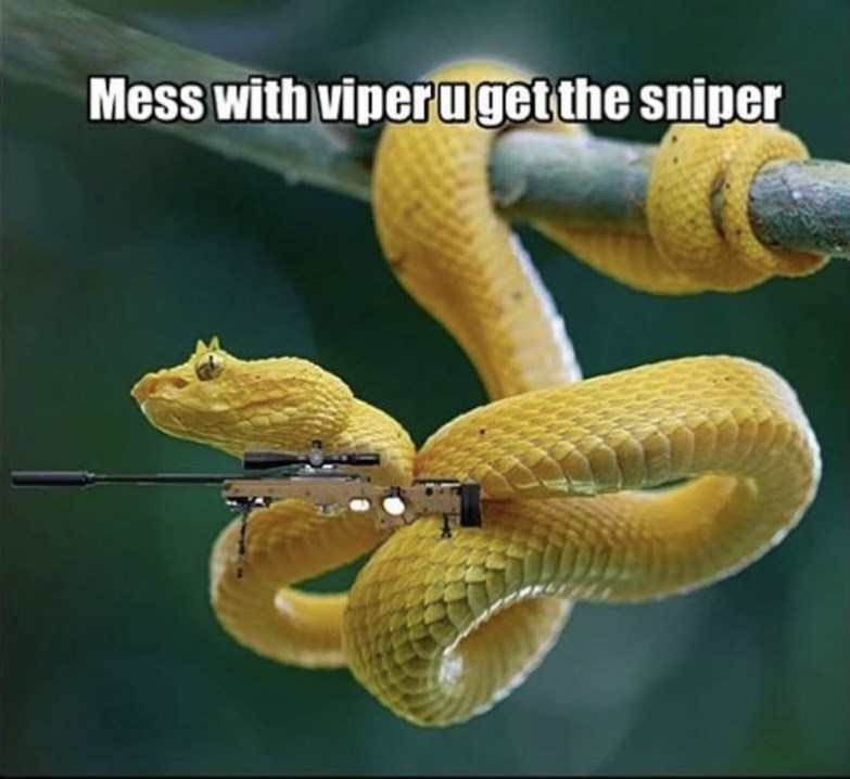 Snake - Mess with viperuget the sniper