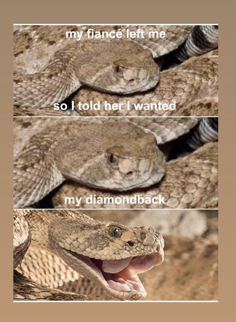 Reptile - my fiancé left me so l told her I wanted my diamondback