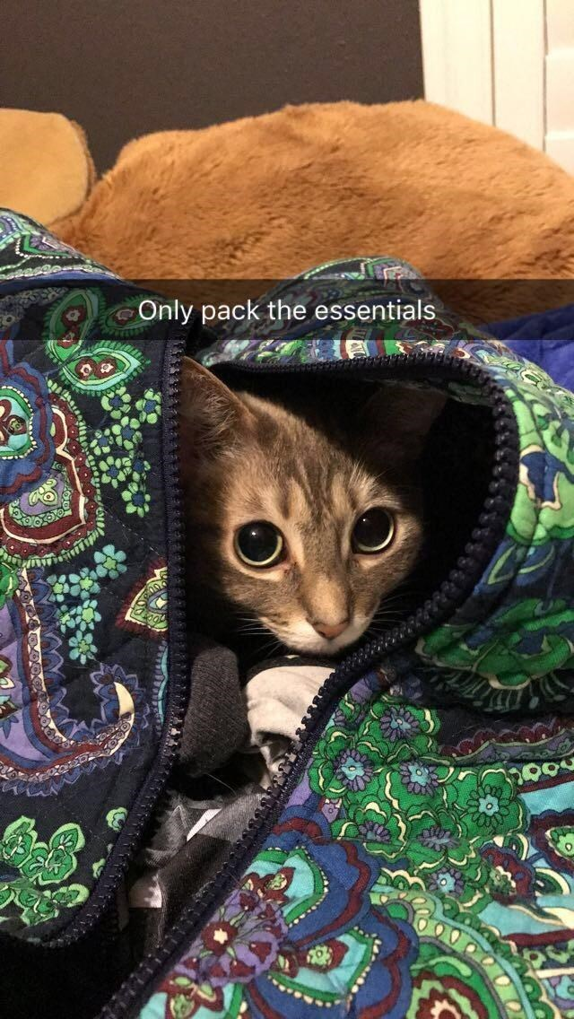 Cat - Only pack the essentials నదిం