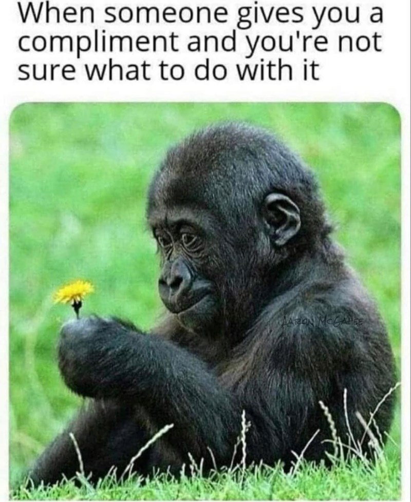 Primate - When someone gives you a compliment and you're not sure what to do with it