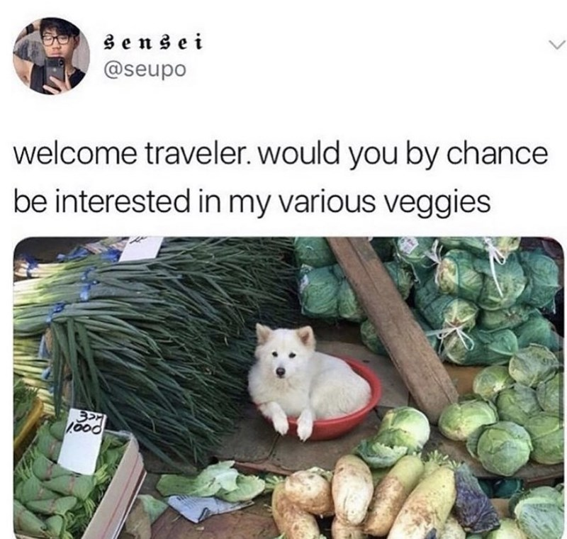Vertebrate - sensei @seupo welcome traveler. would you by chance be interested in my various veggies 1000
