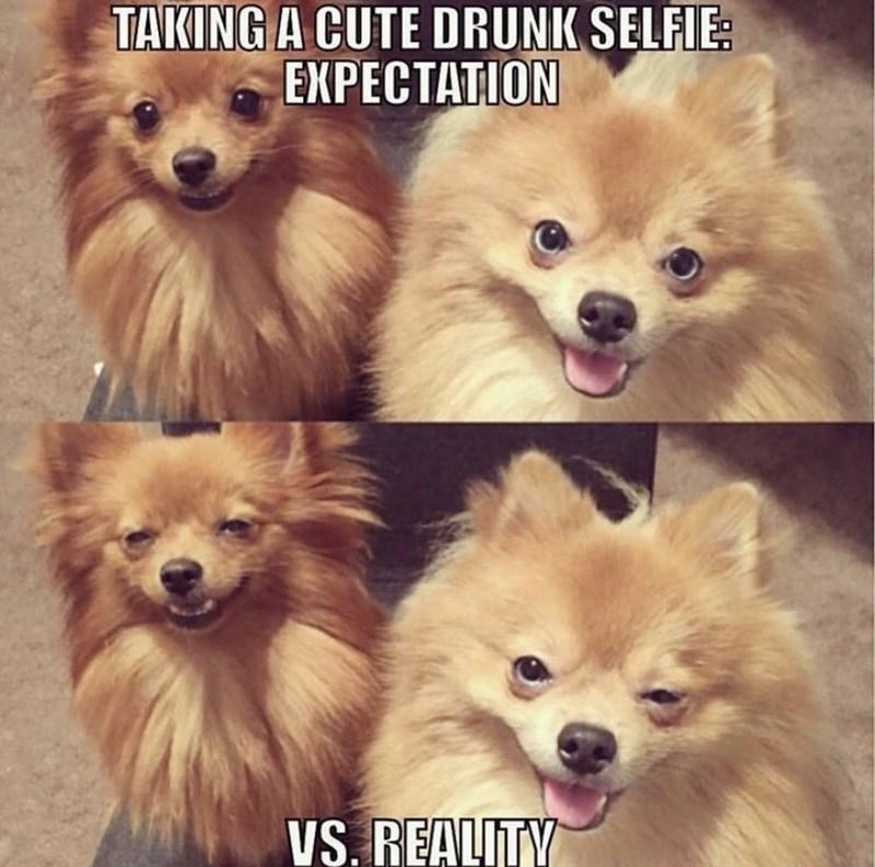 Nose - TAKING A CUTE DRUNK SELFIE: ЕХPЕСТАТION VS. REALITY
