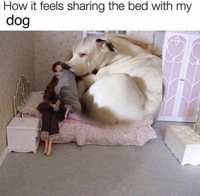 Dog - How it feels sharing the bed with dog my
