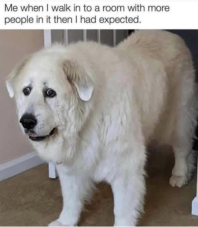 Dog - Me when I walk in to a room with more people in it then I had expected.