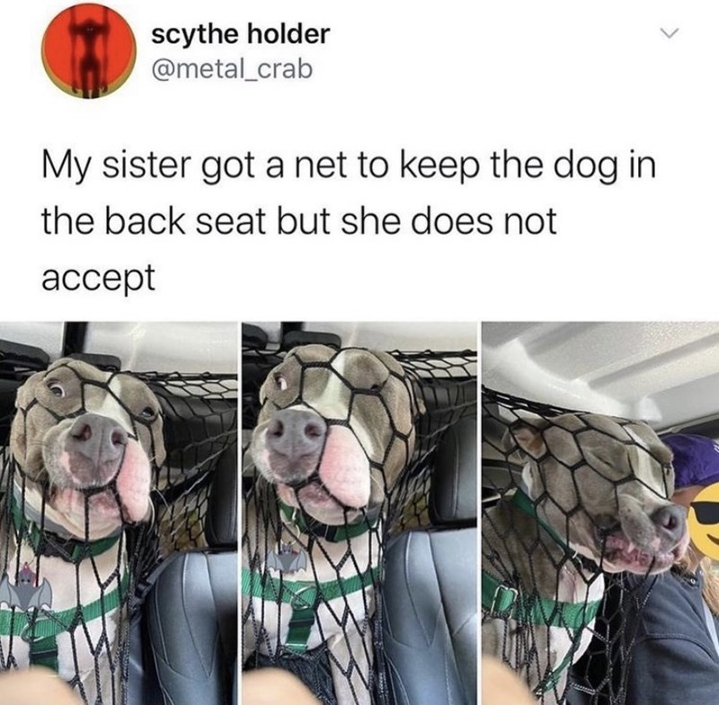 Human - scythe holder @metal_crab My sister got a net to keep the dog in the back seat but she does not ассept