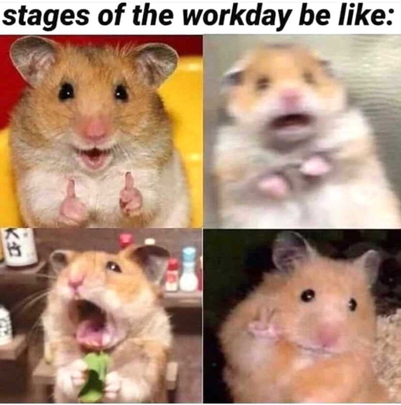 Nose - stages of the workday be like: