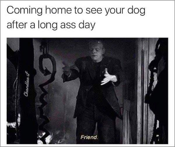 Musical instrument - Coming home to see your dog after a long ass day Friend. Chandlen if
