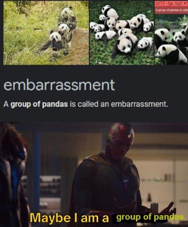 Photograph - WIF fun fact Agroup of pandas is calle embarrassment A group of pandas is called an embarrassment. Maybe I am a group of pandas.