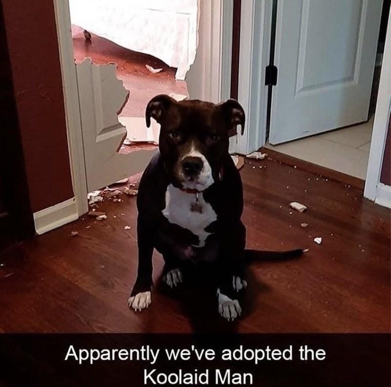 Dog - Apparently we've adopted the Koolaid Man