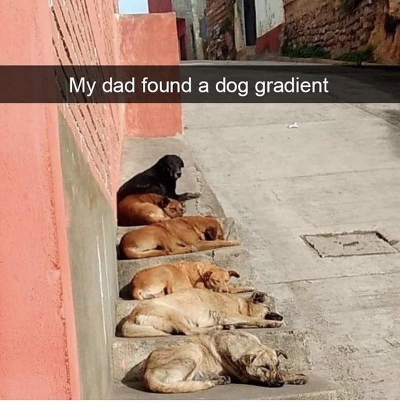 Wood - My dad found a dog gradient