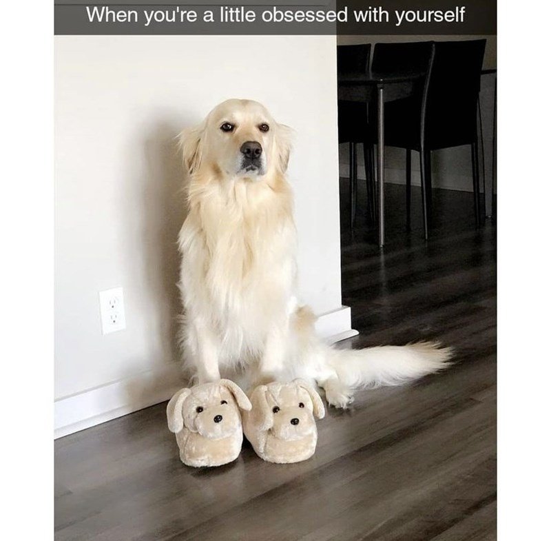 Dog - When you're a little obsessed with yourself