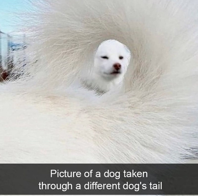 Organism - Picture of a dog taken through a different dog's tail