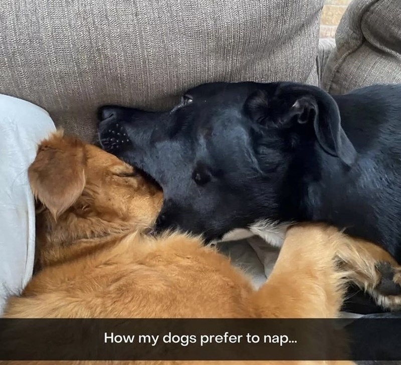 Dog - How my dogs prefer to nap..