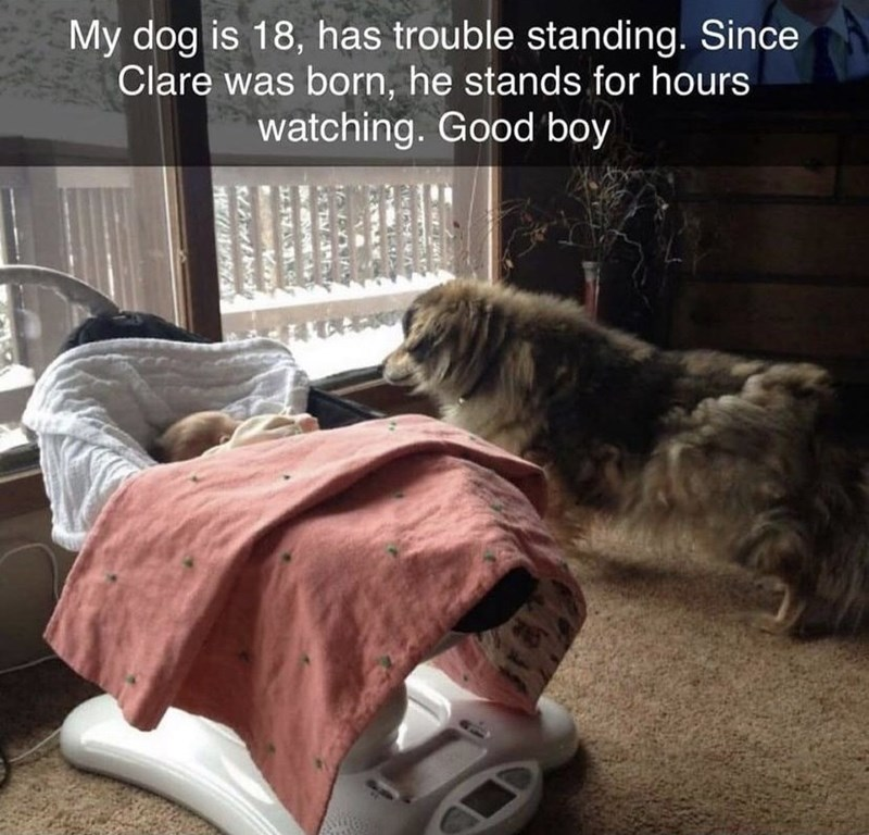 Dog - My dog is 18, has trouble standing. Since Clare was born, he stands for hours watching. Good boy NAA