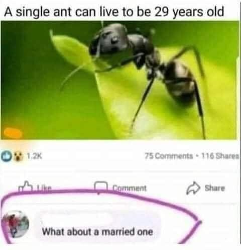 Photograph - A single ant can live to be 29 years old O1.2K 75 Comments 116 Shares Comment Share What about a married one