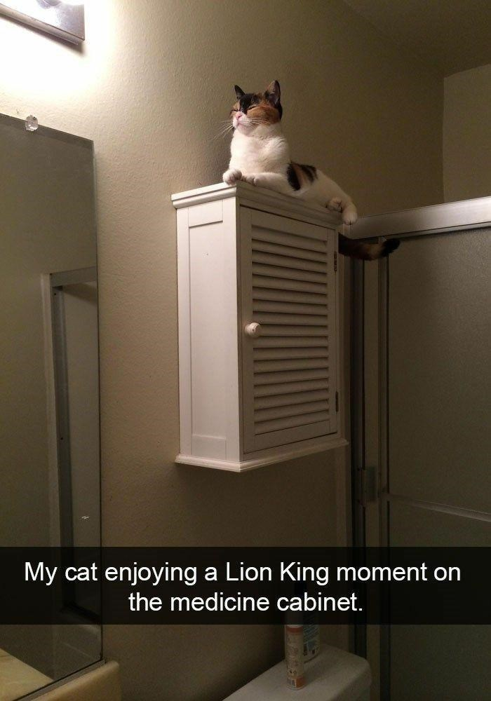 Cat - My cat enjoying a Lion King moment on the medicine cabinet.