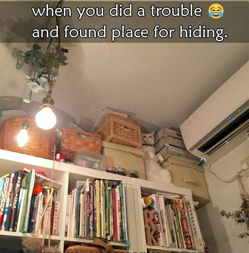 Bookcase - when you did a trouble and found place for hiding. EN P o