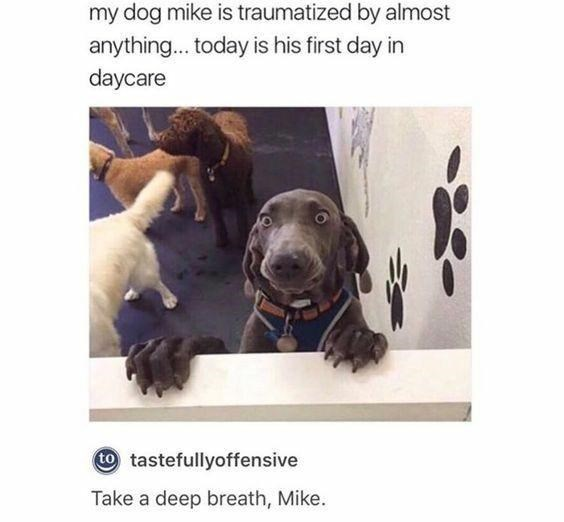 Dog - my dog mike is traumatized by almost anything... today is his first day in daycare Otastefullyoffensive Take a deep breath, Mike.