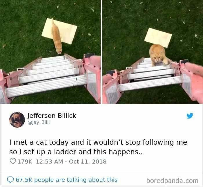 Product - Jefferson Billick @Jay_Billi I met a cat today and it wouldn't stop following me so I set up a ladder and this happens... O179K 12:53 AM - Oct 11, 2018 O 67.5K people are talking about this boredpanda.com