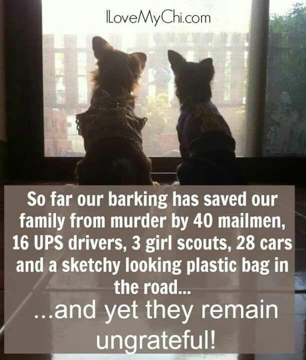 Dog - LoveMyChi.com So far our barking has saved our family from murder by 40 mailmen, 16 UPS drivers, 3 girl scouts, 28 cars and a sketchy looking plastic bag in the road... ..and yet they remain ungrateful!