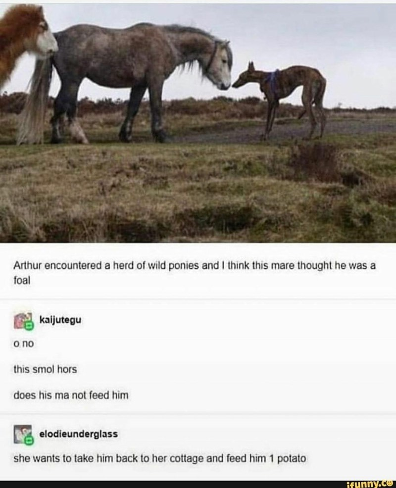 Horse - Arthur encountered a herd of wild ponies and I think this mare thought he was a foal kaijutegu o no this smol hors does his ma not feed him elodieunderglass she wants to take him back to her cottage and feed him 1 potato ifunny.co