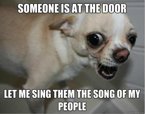 Dog - SOMEONE IS AT THE DOOR LET ME SING THEM THE SONG OF MY PEOPLE quickmeme.com