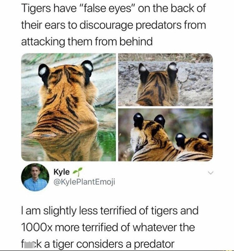 """Water - Tigers have """"false eyes"""" on the back of their ears to discourage predators from attacking them from behind Kyle @KylePlantEmoji Iam slightly less terrified of tigers and 1000x more terrified of whatever the fck a tiger considers a predator"""