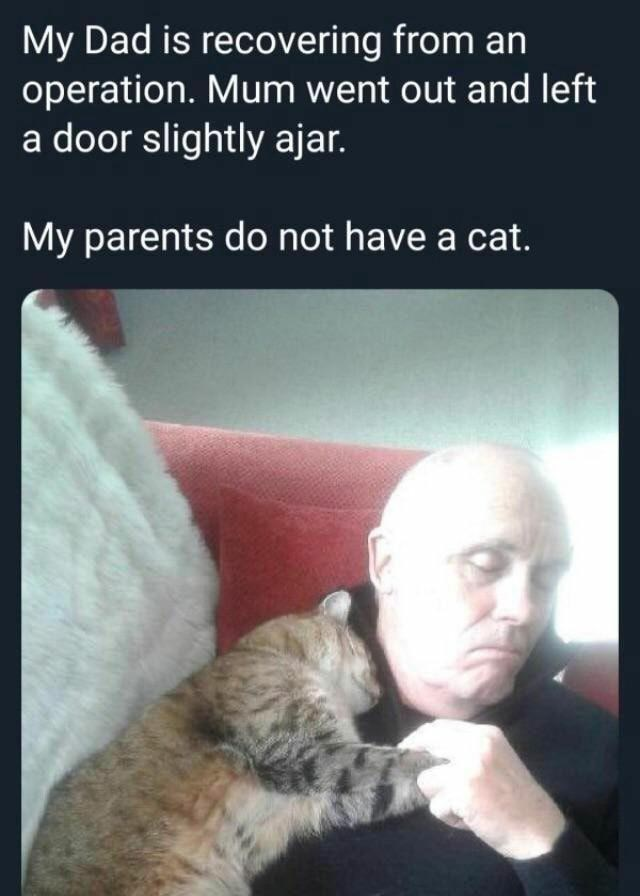 Hand - My Dad is recovering from an operation. Mum went out and left a door slightly ajar. My parents do not have a cat.