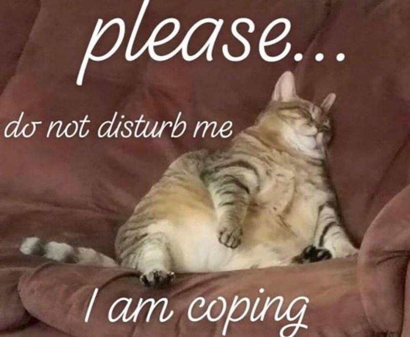 Cat - ase... do not disturb me | am coping