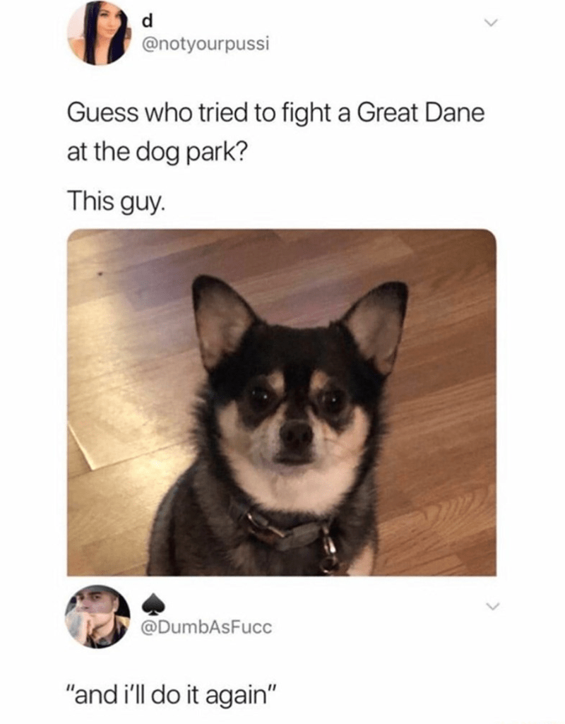 """Dog - d @notyourpussi Guess who tried to fight a Great Dane at the dog park? This guy. @DumbAsFucc """"and i'll do it again"""""""